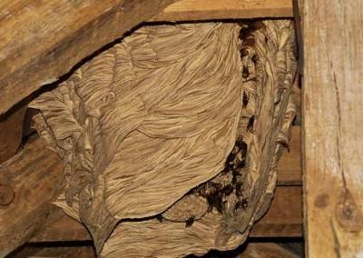 Гнездо с мантия
