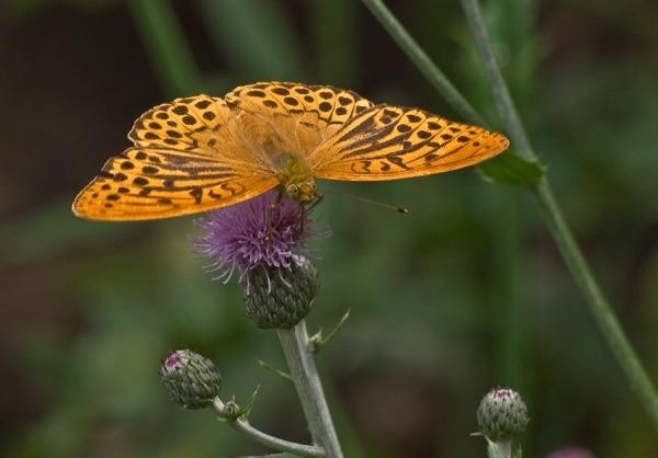 Пеперуди 2