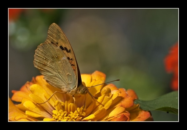 Пеперуди 5