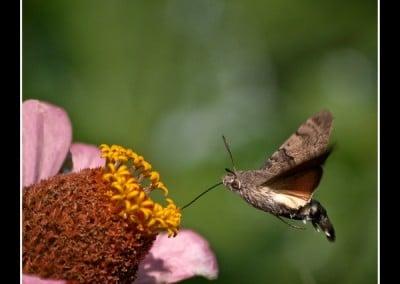Пеперуди 6