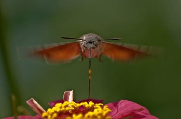 Пеперуди 7