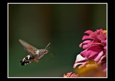 Пеперуди 8