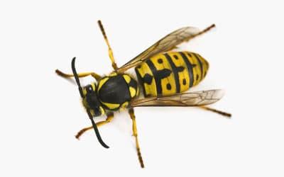 унищожаване на хлебарки